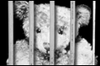 Teddybearin_jail