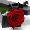 Single_red_rose_lg